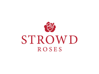 This logo shows a true red rose icon centered above Strowd Roses in all capitals, in a serif font, also in true red..